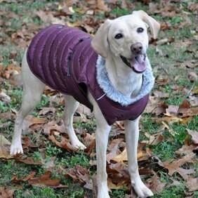 Alpine puffer coat Burgundy size 2x Large